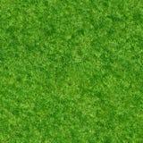 Seamless grass texture Stock Photo