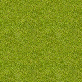 Seamless grass texture. Stock Photo