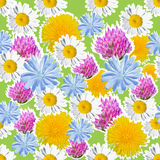 Seamless green background with meadow flowers. Joyful seamless pattern with daisies, clover, dandelion and chicory for the holidays stock illustration