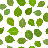 Seamless with green birch leaves Stock Images