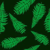 Seamless with green fern Royalty Free Stock Image