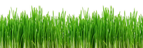 Seamless green grass Stock Photos