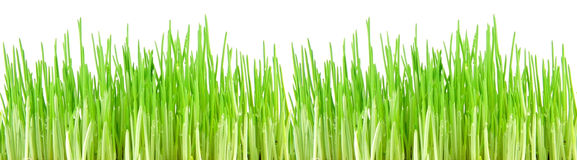 Seamless green grass Royalty Free Stock Images
