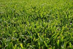 Seamless green grass background Stock Photos