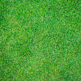 Seamless green grass background Stock Photo