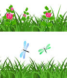 Seamless green grass with flowers flowers and dragonflies Stock Image