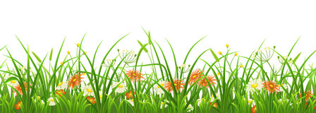 Seamless green grass with flowers. On white background Stock Photo