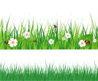Seamless green grass Royalty Free Stock Image