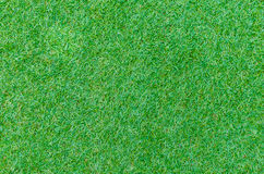 Seamless green grass texture from golf course Royalty Free Stock Photo