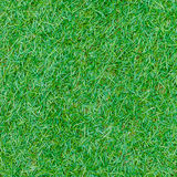 Seamless green grass texture from golf course Royalty Free Stock Image