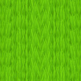 Seamless green grass texture. Tileable early spring green grass background. Royalty Free Stock Photography