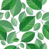 Seamless green leaves Stock Photo