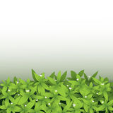 Seamless green leaves with little white flower background Royalty Free Stock Images