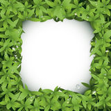 Seamless green leaves with little white flower background. Vector illustration. Seamless green leaves with little white flower background. Water drops on green Stock Photos