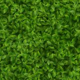 Seamless green leaves pattern spring or summer fresh background. EPS 10 stock illustration