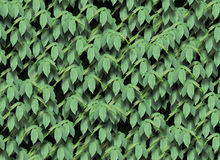 Seamless green leaves pattern Royalty Free Stock Images