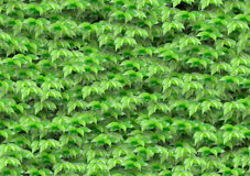 Seamless green leaves pattern Royalty Free Stock Photography
