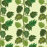 Seamless green liana pattern. Royalty Free Stock Images