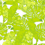 Seamless green pattern with flowers and Toucan Royalty Free Stock Images