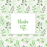 Seamless green plant background with square frame. Vector illustration Stock Photography