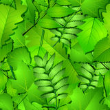 Seamless with green spring leaves Royalty Free Stock Image