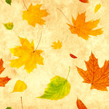 Seamless grunge background with flying autumn leaves Stock Image