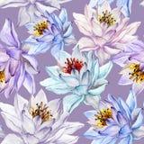 seamless härlig blom- modell Stora färgrika lotusblommablommor på lila bakgrund illustratören för illustrationen för handen för b Royaltyfri Bild
