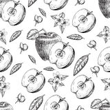 Seamless of hand drawn apple. Vintage sketch style illustration. Organic eco food. Whole , sliced pieces half,leaves and Royalty Free Stock Image