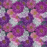 Seamless hand-drawn  aster pattern. Model for design of gift packs, patterns fabric, wallpaper, web sites, etc Stock Image