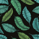 Seamless hand drawn pattern with banana leaves tropical  texture botanic vector   illustration Royalty Free Stock Photography