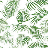 Seamless hand drawn tropical pattern with palm leaves, jungle exotic leaf on white background. Fashion textile print, summer floral wallpaper. Vector Stock Photography