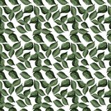 Lilac leaves watercolor seamless pattern Royalty Free Stock Images