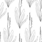 Seamless herbal pattern, Great plantain, Plantago major medicinal plant wild field flower isolated on white background. Hand drawn vector doodle ink sketch for Stock Photo