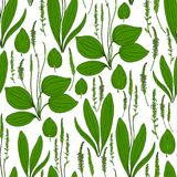 Seamless herbal pattern Great plantain, Plantago major medicinal plant wild field flower isolated on white background. Hand drawn vector illustration texture Royalty Free Stock Photos
