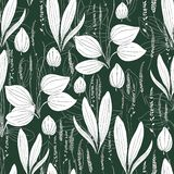 Seamless herbal pattern Great plantain, Plantago major medicinal plant wild white field flower on dark green stock illustration