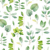 Seamless herbal pattern Royalty Free Stock Image