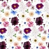 Seamless herbarium pattern Stock Photos