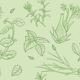 Seamless herbs pattern Royalty Free Stock Image