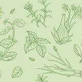 Seamless Herbs Pattern Royalty Free Stock Image