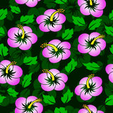 Seamless hibiscus flower pattern Stock Image