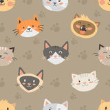 Seamless hipster cats pattern background. Seamless hipster cats pattern vector illustration. Cute animal heads funny decorative background. Color abstract feline Royalty Free Stock Image