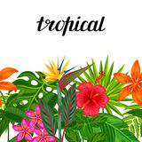Seamless horizontal border with tropical plants, leaves and flowers.  Stock Photography