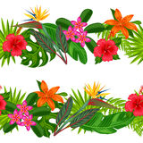 Seamless horizontal borders with tropical plants, leaves and flowers. Stock Photography