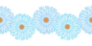 Seamless horizontal frame element of gerbera flower Royalty Free Stock Photography