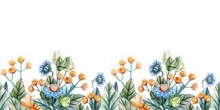 Seamless horizontal pattern of wildflowers royalty free stock image