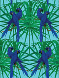 Seamless hyacinth macaw parrot pattern. Stock Photos