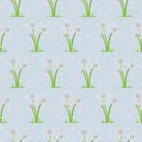 Seamless illustration of dandelions on background Stock Photos