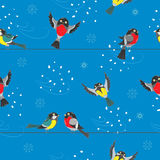 Seamless illustration  with winter birds,winter background Stock Photography