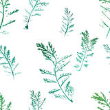 Seamless imprints pattern of the branched herbs. Stock Images