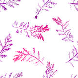 Seamless imprints pattern of the branched herbs. Stock Photography